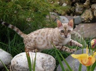 Bohemia of Leopard Planet